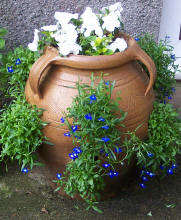 Strawberry pot planted up with white busy lizzies and blue lobelia.